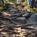 Trail has lots of roots and and a few rocky areas- Colchuck Lake Trail