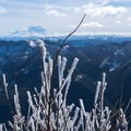 Ice formed on a bush- Mailbox Peak via the Old Trail