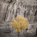 after the slot -  cottonwood- Little Wildhorse Canyon Hike