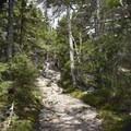 2nd half of the trail- Mount Kearsarge