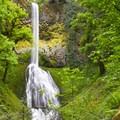 Pup Creek Falls- Clackamas River Trail