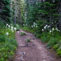 Killen Creek Trail & Bear Grass- Mount Adams: High Camp via Killen Creek