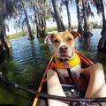 Loyal paddle buddy- Lake Martin Paddling