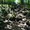 lots of roots and rocks- Mount Peak (Pinnacle Peak)