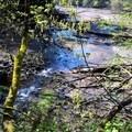 Ellis creek- Priest Point Park