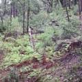 fern hillside- Feather Falls + Frey Creek Falls
