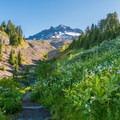 late summer wildflower- Paradise Park, Mount Hood