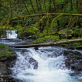 Salmonberry System- Upper Salmonberry River Trail