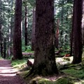 Panoramic trail to Silver Falls- Silver Falls and Hot Springs Loop Trail