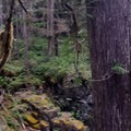 Panoramic Silver Falls- Silver Falls and Hot Springs Loop Trail