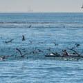 Birds galore- Seabright Beach