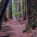 Hiking Skyline To The Sea Trail- Big Basin Redwoods State Park