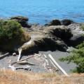 San Juan Island, Sea Kayaking Smallpox Bay to Deadman Bay