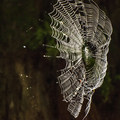 Spider web along the Moments in Time Interpretive Trail.- Moments in Time Interpretive Trail