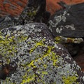 Snow Canyon State Park.- Lava Tube Loop