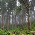 The lush and foggy (soggy) forest on the Tillamook Head Trail.- Tillamook Head Hike