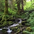 Eagle Creek Hike (Clackamas River Tributary)
