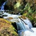 Sweet Creek Hike