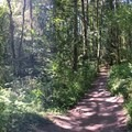 Panorama at the start of the trail- Tryon Creek State Park, Cedar Trail Hike