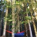 Plenty of trees for hammock camping- Pamelia Lake + Grizzly Peak