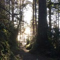 Sun peering through the trees at Cape Lookout- Cape Lookout Hiking Trail