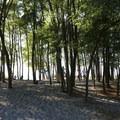Slackline at Golden Garden Park- Golden Gardens Park