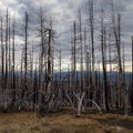View to Mount Hood Through Forest Fire Area- Mount Adams, South Climb