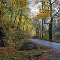Eagle Creek Fall colors- Eagle Creek Hike to Tunnel Falls