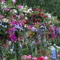Butchart Gardens- The Butchart Gardens