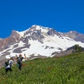 Paradise Park in July- Paradise Park via Timberline Lodge