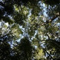 Watmough Bay tree canopy view- Lopez Island: Watmough Bay