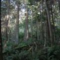 Watmough Bay forest view- Lopez Island: Watmough Bay
