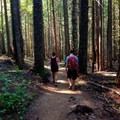 Walking through the old growth back to the car. - Burnt Lake + Zigzag Mountain