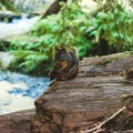 Up and close with the animals- Sol Duc Falls