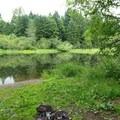 Cochran Pond.- Upper Salmonberry River Trail