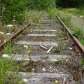 Tracks at Cochran Pond.- Upper Salmonberry River Trail