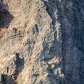Mountain Goat!- Canyon Creek Meadows