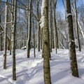 Walking through the woods.- Trapp Family Lodge Cross-country Ski Center