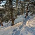 Intersection of the Long Trail and the spur to the lodge.- Taft Lodge