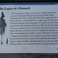 Hoh Rain Forest's Big Sitka Spruce