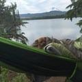 Wakey uppy puppy! - Olallie Lake Resort