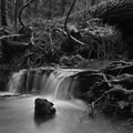 Tiny waterfall along the trail.- Larison Creek Trail