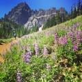 Upper meadows- Canyon Creek Meadows