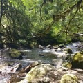 Lost Creek from Sandy River Trail- Sandy River Trail