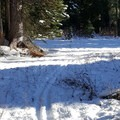 Side trail- Mt. Hood Meadows Eastside