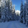 Glacier View Ski + Snowshoe Loop Trail