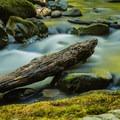 Siouxon Creek- Siouxon Creek Hike