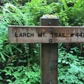 Larch Mt. Trail #44- Larch Mountain Trail
