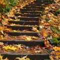 The stairs, covered in leaves, to the falls viewpoint.- Bridal Veil Falls, Oregon