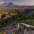 Life and death in the blast zone- Mount St. Helens National Volcanic Monument